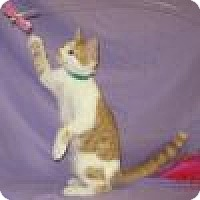 Adopt A Pet :: Kosmo - Powell, OH