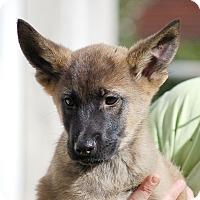 Adopt A Pet :: Dixie AD 01-23-16 - Preston, CT