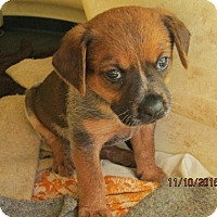 Adopt A Pet :: Stormie - Lincolndale, NY