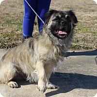 Adopt A Pet :: Smoky - Brattleboro, VT