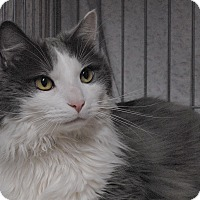Adopt A Pet :: Jackson - Winchendon, MA