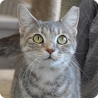 Adopt A Pet :: Leliana - Gaithersburg, MD