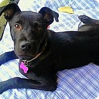Adopt A Pet :: Weaver - Aurora, CO