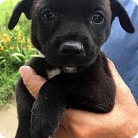 Adopt A Pet :: Nathan - Danbury, CT