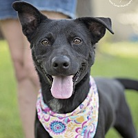 Adopt A Pet :: Gypsy - Houston, TX