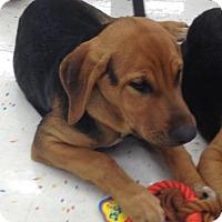 Adopt A Pet :: Kameyo - Hillside, IL