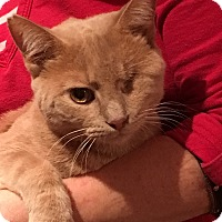 Adopt A Pet :: Jack Sparo - Germantown, MD
