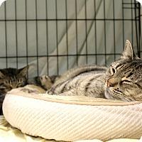 Adopt A Pet :: Mimsy and Sally - Warwick, RI