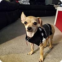 Adopt A Pet :: Misha - Denver, CO