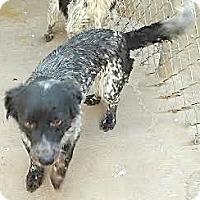 Adopt A Pet :: Molly - Lakewood, CO