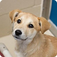 Adopt A Pet :: Dasher - Bryan, TX