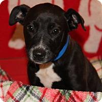 Adopt A Pet :: Tobias - Waldorf, MD
