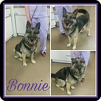 German Shepherd Dog Dog for adoption in Steger, Illinois - Bonnie