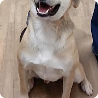 Adopt A Pet :: Jasper - Divide, CO