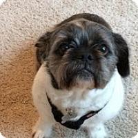Adopt A Pet :: Hazel - Cedar Rapids, IA
