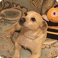 Adopt A Pet :: Maximilian - Dayton, OH