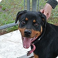 Adopt A Pet :: Suzy - Vancleave, MS