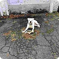 Adopt A Pet :: Memphis - Freeport, NY