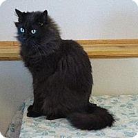 Adopt A Pet :: Weaver - Shell Lake, WI