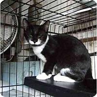 Adopt A Pet :: JoJo - Fort Lauderdale, FL