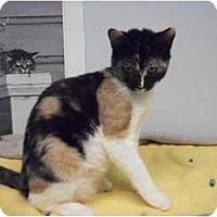 Adopt A Pet :: Megan - Modesto, CA