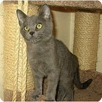 Adopt A Pet :: Whisper - Palmdale, CA