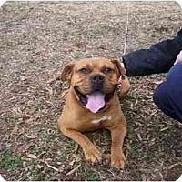 Adopt A Pet :: Duke - Wakefield, RI
