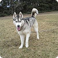 Adopt A Pet :: Ryssa - Egremont, AB