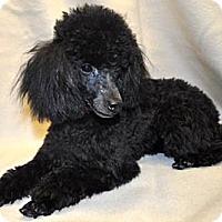 Adopt A Pet :: TOBY - Elk River, MN