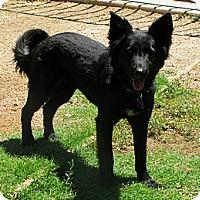 Adopt A Pet :: FRISKEE - Phoenix, AZ
