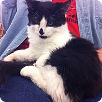 Adopt A Pet :: Gage M - Sacramento, CA