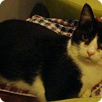Adopt A Pet :: Elvis - Muncie, IN