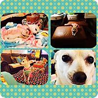 Adopt A Pet :: Annabelle - Las Vegas, NV