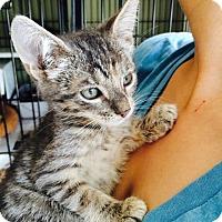 Adopt A Pet :: Aiden - Island Park, NY