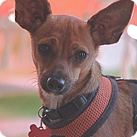 Adopt A Pet :: Roo - Hollister, CA