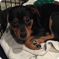Adopt A Pet :: Tippy - Sparta, NJ