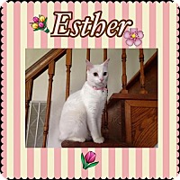 Domestic Shorthair Cat for adoption in Sorrento, Louisiana - Esther