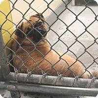 Adopt A Pet :: BONNIE - Anchorage, AK