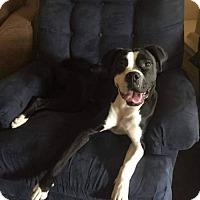 Boxer Mix Dog for adoption in Lewistown, Pennsylvania - Elsa