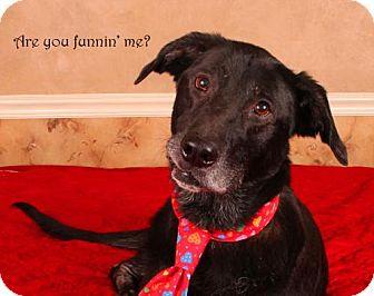 Labrador Retriever Dog for adoption in Nashville, Tennessee - Ralphie