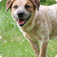 Adopt A Pet :: Samson John - Nashville, TN