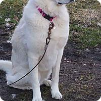 Adopt A Pet :: Rhea - Adotped! - Ascutney, VT