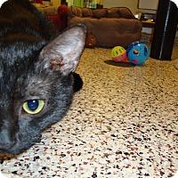 Adopt A Pet :: Garnet - Aiken, SC