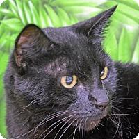 Adopt A Pet :: Kia - Englewood, FL