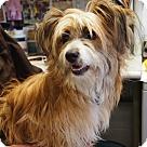 Adopt A Pet :: Rollo