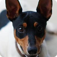 Adopt A Pet :: Larry - Toccoa, GA