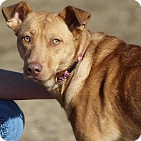 Adopt A Pet :: Peaches - Lander, WY
