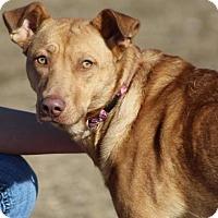 Adopt A Pet :: Peaches - Lander, WY