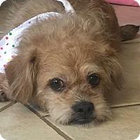 Adopt A Pet :: Frankie - Windermere, FL