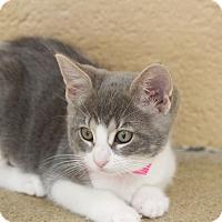 Adopt A Pet :: Jill - Chula Vista, CA